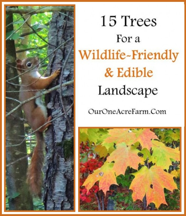 15 Trees For A Wildlife-Friendly & Edible Landscape