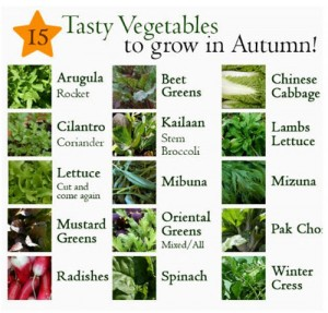 15 Vegetables You Can Grow In Autumn