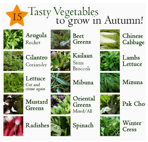15-Vegetables-You-Can-Grow-In-Autumn