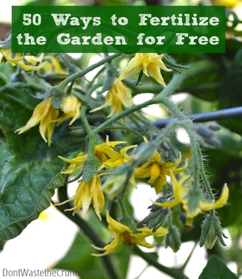 50-Ways-To-Fertilize-The-Garden-For-Free