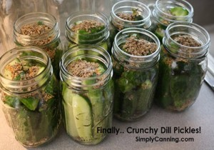 Crunchy Dill Pickle Recipe