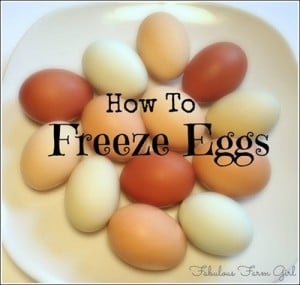 How To Freeze Fresh Eggs