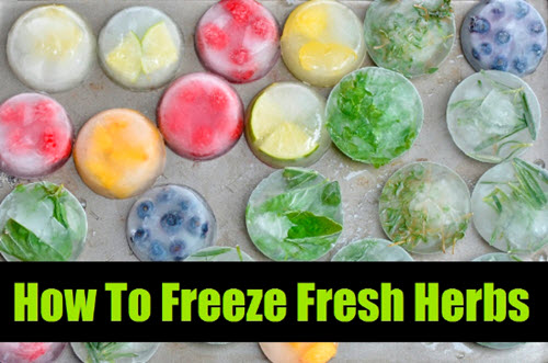 How-To-Freeze-Herbs