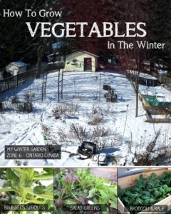 How To Grow Veggies In The Winter