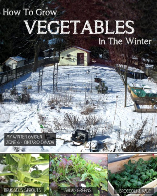 How-To-Grow-Vegetables-In-The-Winter