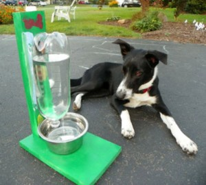 How To Make A Self-Filling Water Bowl For Dogs And Cats