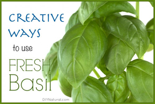 How-To-Use-Fresh-Basil-In-Four-Surprising-Ways