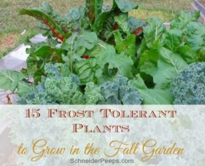 15-Frost-Tolerant-Vegetable-For-Fall