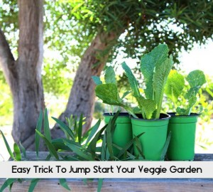 Easy Trick To Jump Start Your Veggie Garden