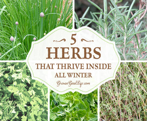 Grow-Herbs-Indoors-5-Herbs-That-Thrive-Inside-All-Winter
