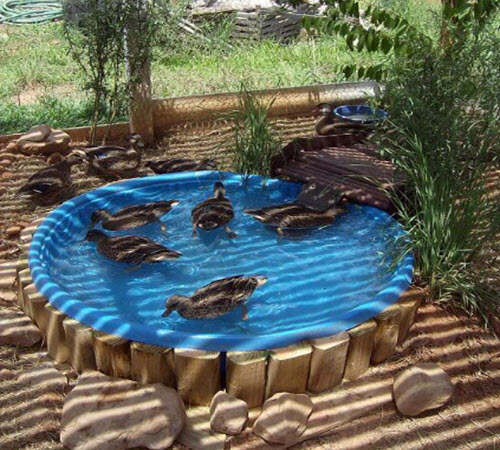Diy cable spool duck house homestead survival for Making a fish pond
