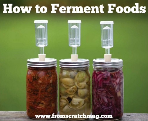 Fermented Food Recipes For Kids