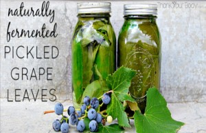 Naturally Fermented Pickled Grape Leaves