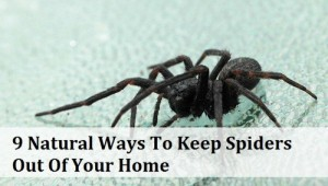 9 Natural Ways To Keep Spiders Out Of The Home