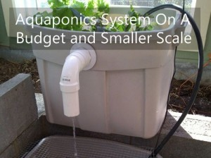 Aquaponics System On A Budget And Smaller Scale