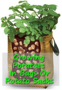 Growing Potatoes In Bags Or Potato Sacks