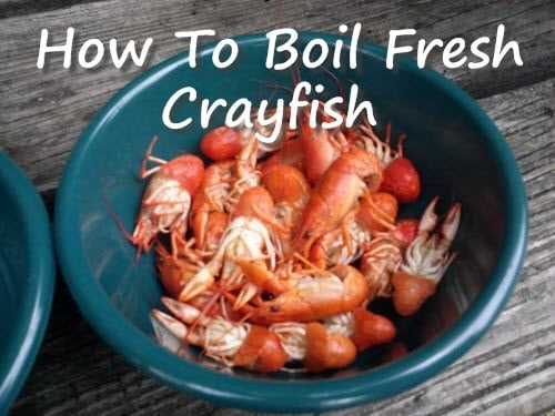 How-To-Boil-Fresh-Crayfish