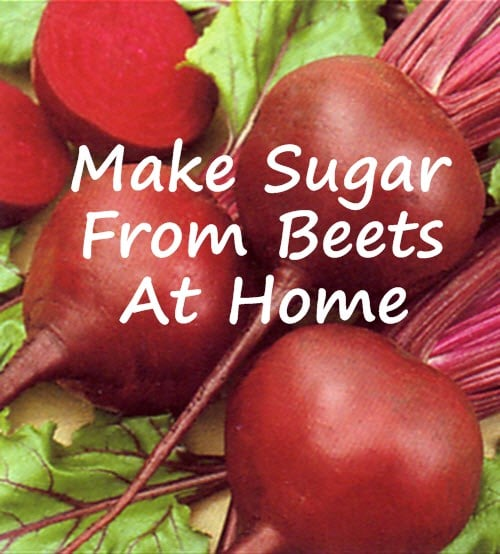 Make-Sugar-From-Beets-At-Home