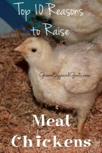 Top 10 Reasons Why You Should Raise Meat Chickens