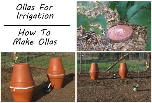 Ollas For Irrigation Tutorial