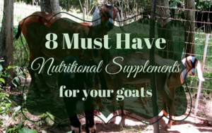 8 Must-Have Nutritional Supplements For Goats