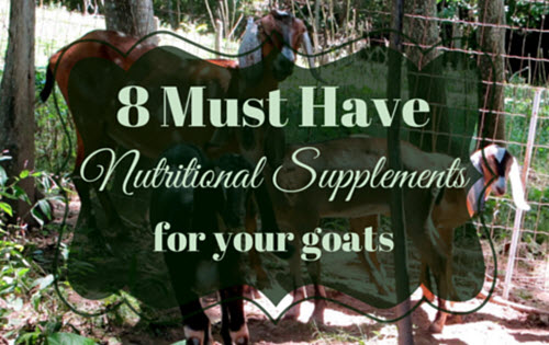 Supplements-For-Goats