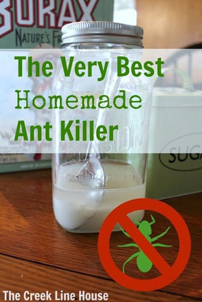 The-Very-Best-Homemade-Ant-Killer
