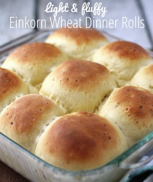 Light And Fluffy Einkorn Dinner Rolls