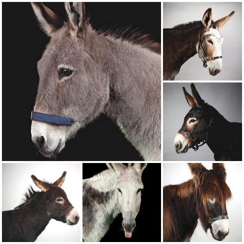 choosing-donkey