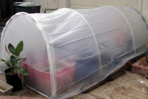 Build A 5 x 5 Greenhouse For Under $25
