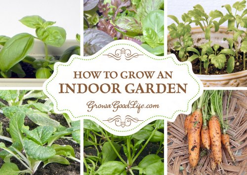 grow-an-indoor-garden