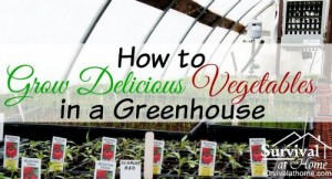 grow-vegetables-in-a-greenhouse