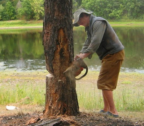 Guide: How To Cut Down A Tree