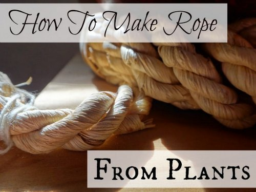 make-rope-from-plants