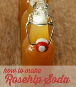 How To Make Fermented Rosehip Soda