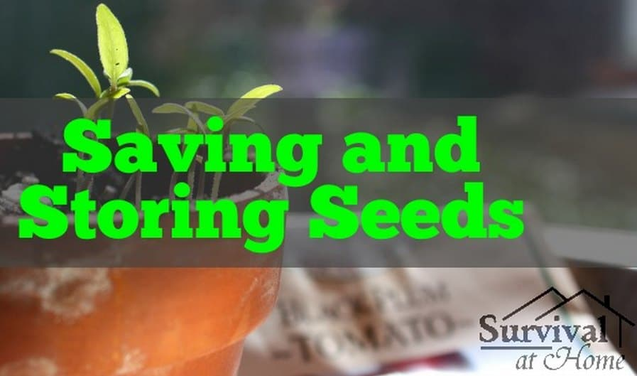 Saving And Storing Seeds Guide