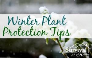 Winter Plant Protection Tips