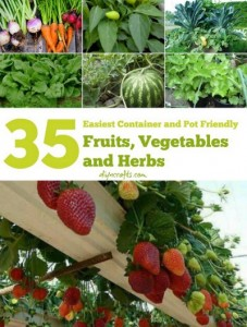 35 Easy Container Vegetables, Fruits And Herbs