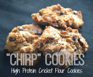 cricket-flour-cookies