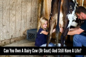 Can You Own A Dairy Cow (Or Goat) And Still Have A Life?