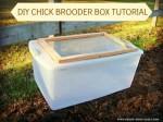 DIY Chicken Brooder Box Tutorial