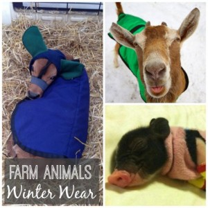 Farm Animals Winter Wear