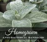 Homegrown Antibacterial Bandages Are Better Than The Store Bought Kind