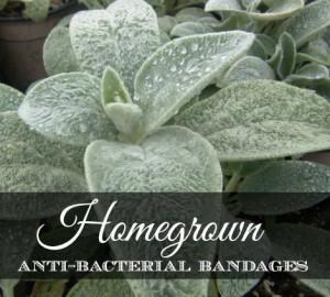 homegrown-antibacterial-bandages