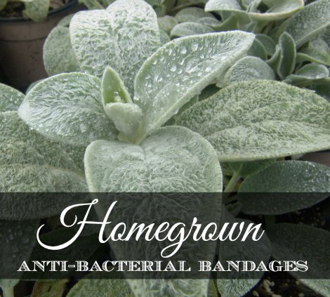 homegrown-antibacterial-bandages