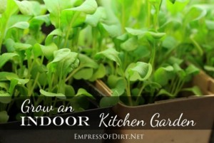 Grow An Indoor Kitchen Garden