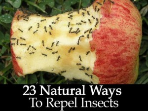 23 Natural Ways To Repel Insects