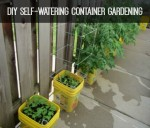 DIY Self-Watering Container Gardening