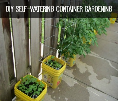self-watering-container