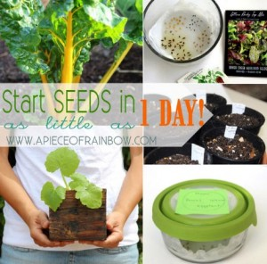Super Fast Ways To Start Seeds